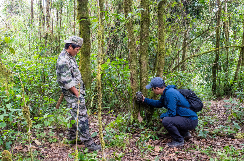 wildlife protection in the rain forest by locals